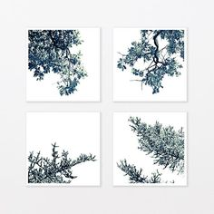 Tree Photography Black and White Print Set - tree branch for trendy man