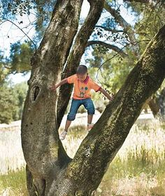 Childhood wouldn't be complete without climbing trees!    Photo by Stephanie Rausser