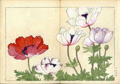 1917 1st Ed Tanigami Konan, Japanese Woodblock Print, Panteek, Red Anemone