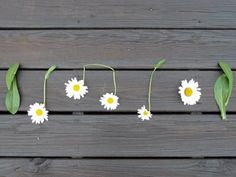 Not a big daisy person, but love this. Reminds me of Kelly.
