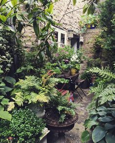 Changes Caused by Unsustainable Practices Courtyard garden, Frome. Small Courtyard Gardens, Back Gardens, Small Gardens, Outdoor Gardens, City Gardens, Front Courtyard, Small City Garden, Amazing Gardens, Beautiful Gardens