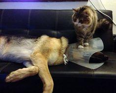 Top 30 des preuves que les chats sont des branleurs (mais pourquoi sont-ils si méchants ?)