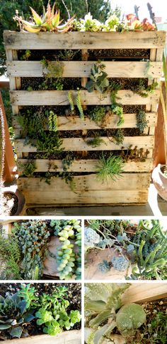 Cedar mini shipping pallet style succulent green wall for Pallet succulent garden