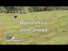 Want to Train Your Puppy to Come to You at the Park - Dog-Care