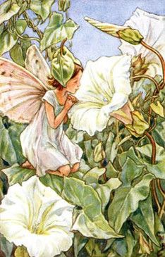 Wayside Fairies: White Bindweed Flower Fairy by Cicely Mary Barker Cicely Mary Barker, Fantasy Kunst, Fantasy Art, Glitter Flowers, Fairy Pictures, Vintage Fairies, All Nature, Beautiful Fairies, Flower Fairies