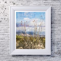 Abstract Photography Print, Ocotillo Plant, Chihuahuan Desert, Texas, Big Bend National Park, Cactus, Landscape Photography, Photo Print by SusanGottbergPhotos on Etsy