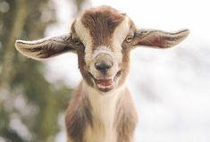 Estes 30 animais que parecem estar sorrindo estão prestes a aquecer até mesmo os corações de pedra entre nós.