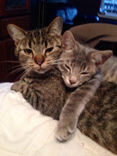 22-mães-de-filhotes-que-estão-terrivelmente-sobrecarregadas-2