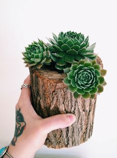 Hollowed out stump with planted succulents.