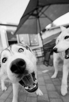 #perros #mascotas #mascoweb