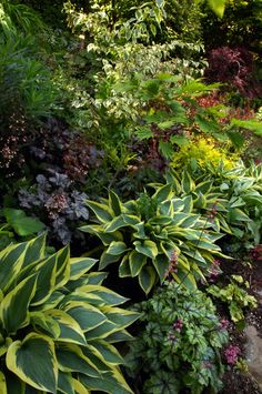 This is so similar to what I want for my front garden. Hostas?? Grasses and succulents.