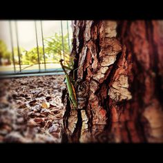 Prey-mantis chilling on a tree trunk