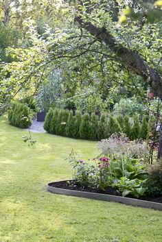 Garden Flow: If boxwood, sheet metal edges and a little Outdoor Garden, Plants, Garden, Boxwood, Outdoor, Garden Beds, Flowers