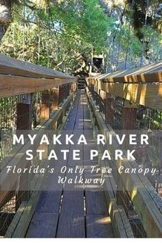 Visiting Myakka River State Park in Sarasota, FL Myakka River State Park is a Florida State Park in Sarasota and 58 square miles of gorgeous scenery. The myakka canopy walkway is a must do when you visit. Venice Florida, Florida Usa, Florida Keys, Siesta Key Florida, Visit Florida, Sarasota Florida, Old Florida, Florida Vacation, Florida Travel