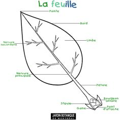 Les parties de la feuille Shinrin Yoku, Kids Things To Do, Learn French, French Language, Pre School, Grade 1, Horticulture, Techno, Montessori