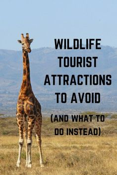 Wildlife Tourist Attractions to Avoid (and What to do Instead). Lots of great advice covering most wildlife that you can come across as a tourist or volunteer! Always only join an ethical volunteer project when dealing with wildlife! Uganda, Attraction, Safari, Animal Experiences, Sustainable Tourism, Sustainable Outfits, Responsible Travel, Travel Tourism, Travel Tips