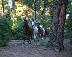 Rancheros close encounters with animals © Sonia Farasopoulou Close Encounters, Ranch, Greek, Horses, Island, Explore, Country, Animals, Guest Ranch