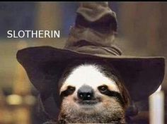 Hi I'm Harry Slother.