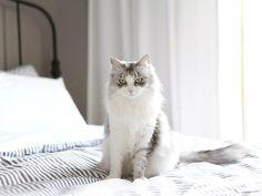 눈부신 딸래미 #수리#노르웨이숲#노르웨이숲고양이#norwegianforestcat#norwegianforest#catstagram#수리수리뱅뱅#냥스타그램#캣스타그램#cat#neko#kitty#cutie#kitten#suri#고양이#meow#instacat#instacats#catsofinsta#cat by jollybenny