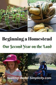 We started our homesteading journey as suburban homesteaders in a townhouse not far from Washington, D.C. Growing vegetables and herbs in containers on our tiny back deck, replacing landscaped azaleas and ivy with tomatoes, cucumbers, and bush beans, learning to can, sew, and cook from scratch were the tasks we started with. As much as we wanted a home in the country and to increase our self-sufficiency, we weren't in a position to move. For five years we dreamed and planned of beginning a…