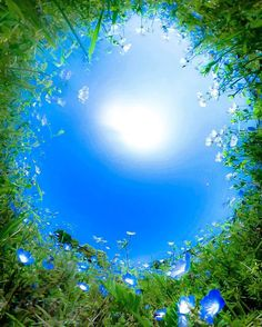 Nemophila and the blue sky View Wallpaper, Sunset Wallpaper, Creative Photography, Nature Photography, Greek Goddess Art, Cool Pictures, Beautiful Pictures, Pretty Photos, Background Pictures