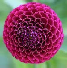 Fibonacci Sequence in Nature and Plants. – Plants and Beyond Fractals In Nature, Spirals In Nature, Geometric Patterns, Geometric Shapes, Color Patterns, Flower Patterns, Motifs Organiques, Natural Form Art, Theme Nature