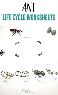 Do your kids love bugs and insects? Get to know the different life stages of ants with these cute ant life cycle worksheets. How many parts of the ant can you name? Kindergarten Science Experiments, Science Activities For Kids, Summer School Activities, School Fun, Plant Life Cycle Worksheet, Homeschool Science Curriculum, Homeschooling, Cycle For Kids, Apple Life Cycle