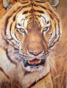 I'm No Kitten an original painting of a tiger by British wildlife artist Alan M Hunt. Part of a collection of paintings of big cats. Wildlife Paintings, Wildlife Art, Animal Paintings, Animal Drawings, Tiger Species, Tiger Painting, Tiger Artwork, Tiger Drawing, Pet Tiger