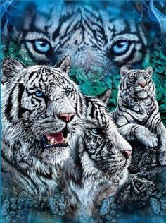 White Tigers Blue Super Soft Fleece Throw Blanket 50x60