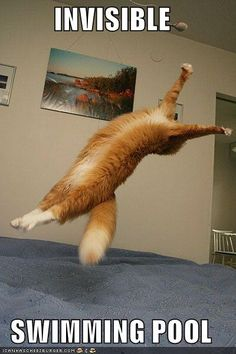 1000 Images About Invisible On Pinterest Cat Toys