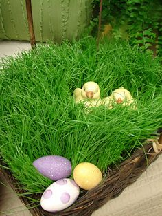 Plant Cute Little Baskets Of Rye Grass For Easter So Doing This My Kids Garden Themed Year