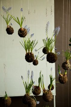 string gardening is a wonderful and inexpensive way to bring all sorts of plants into your indoor AND outdoor gardens.