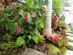 Move Bromeliads to east side of garage