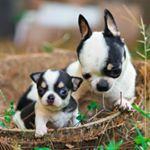 6 months health guarantee for all puppies Tel : 082120141155 WA : 08996938820  Line chat RIO FARM