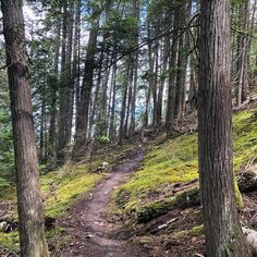 Just a quickie hike during lunch 'break' today. We were both suffering from Fog Nog this am, and nothing clears the cobwebs like lungs full… Lungs, Hiking, Nature, Walks, Naturaleza, Trekking, Nature Illustration, Hill Walking, Off Grid