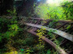 Dark Roasted Blend: Surreal Abandoned Amusement Park in Berlin - roller coaster tracks