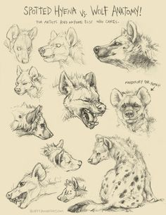 Hyena vs Wolf Learning to draw Freya's hyena form Animal Sketches, Animal Drawings, Drawing Sketches, Drawing Tips, Art Reference Poses, Drawing Reference, Poses References, Anatomy Drawing, Anatomy Art
