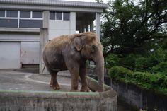 桐生が丘動物園