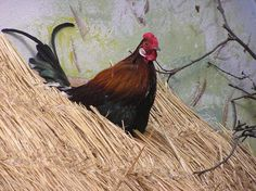Rooster on a hay roof Free Use Images, Free Stock Photos, Rooster, Animals, Animales, Animaux, Animal, Animais, Chicken