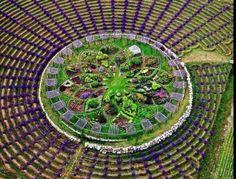 Wander through a lavender labyrinth