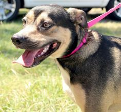 Jessi is an 1-2 year year old Shepherd mix. She is friendly, playful, and ready for a family home! Jessi has been an inside dog.Behavior and personalities are based on what we see here at the shelter.  We do our best to work with every resident at...