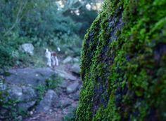 Cuánto disfrutó #Tuno en #losalcornocales . Y nosotros también!!! Te contamos en el #blog todas las curiosidades de este precioso parque. #cadizmehizoami  #viajarfazbem #viajarconperro #dog #travellife #travelblogger #travelwithdog #travel #travelgram #ilovetravelling #naturalpark #nature #naturaleza #ilovedog #ok_andalucia #ok_cadiz #alcornoque #alcornocales #verde #campo #naturaleza #viajesynaturaleza #travelblogger #travelblog #traveler