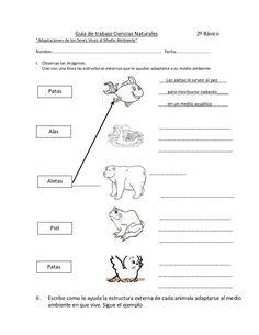 Guía de trabajo adaptaciones de los seres vivos al medio ambiente. ci…