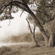 Valokuvatapetti - Tree in a Fog