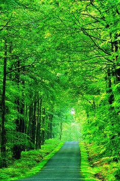New Summer Nature Photography Country Paths Ideas Summer Nature Photography, Beautiful Landscape Photography, Best Background Images, Photo Background Images, Natural Background, Beautiful Landscape Wallpaper, Beautiful Landscapes, Green Screen Backgrounds, Green Screen Images