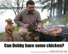 ツ Poor Dobby dachshund--he just wants a tiny bit of chicken, Master.