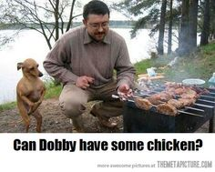 ツ Poor Dobby dachshund--he just wants a tiny bit of chicken, Master.