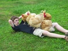 A young man lying in a pile of chickens. | 41 Pictures You Need To See Before The Universe Ends