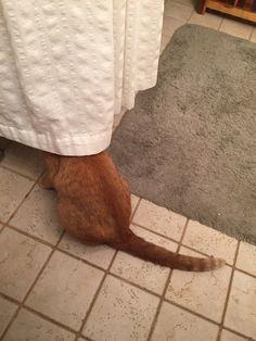Stealth Level: Genius Photo via Imgur