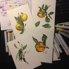 Tangerines. Behance. https://www.behance.net/SolomatinaYuliya